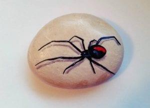 Cool Spider Rock