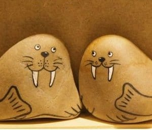 cute seal rocks